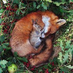 Fuchs und Hase.jpg