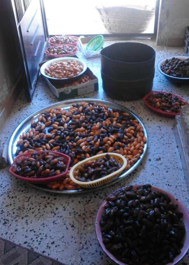 Libyen-Datteln sortieren. Hier trocknen sie nicht am Baum, da das Klima zu feucht ist.