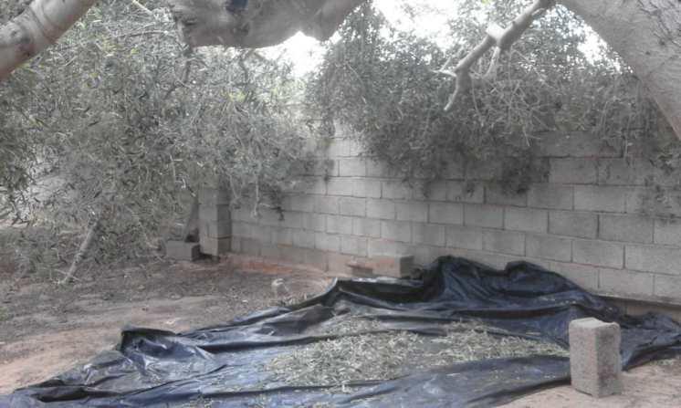 Libyen Garten