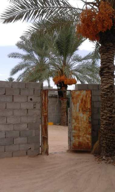 Libyen Garten1
